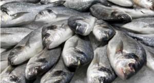 ψαρια και διατροφή